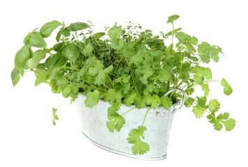 Fresh herbs in metal pot.