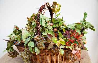 Basket with grapes and fall leaves.