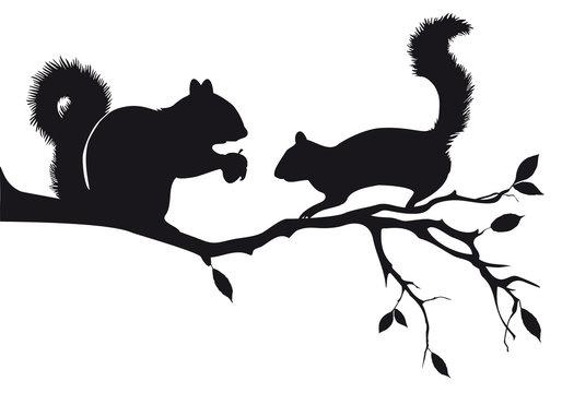 squirrels on tree branch, vector
