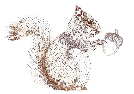 squirrel with acorn, vector