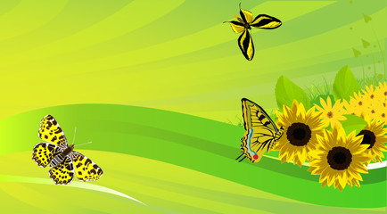 yellow butterflies and sunflowers on green