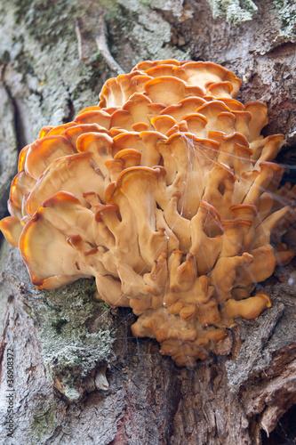 Champignon sur tronc d 39 arbre photo libre de droits sur la banque d 39 images image - Champignon sur tronc d arbre ...