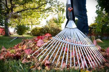 Raking Leaves.