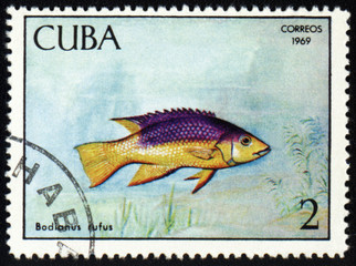 Fish Bodianus rufus on post stamp