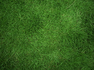 real grass background
