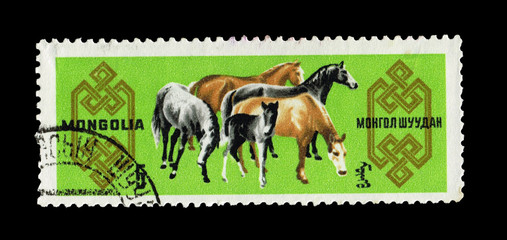 MONGOLIA, shows  horses,  circa 1965