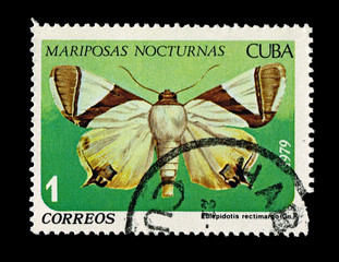CUBA,  Mariposas Nocturnas Eulepidotis rectimargo,  circa 1979
