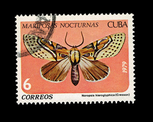 CUBA, Mariposas Nocturnas Noropsis hieroglyphica,  circa 1979