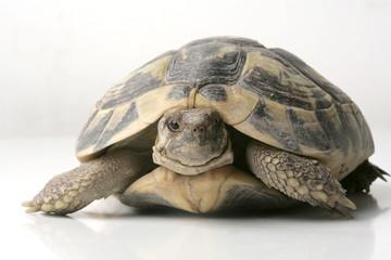 Photo sur Plexiglas Tortue tartaruga