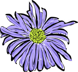 a sketch of the blue flower resembling a daisy