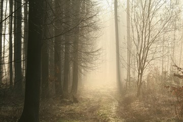 Keuken foto achterwand Bos in mist Dirt road leading through the early spring forest
