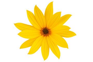 Wall Mural - Large yellow daisy