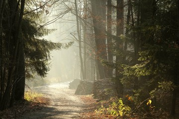 Keuken foto achterwand Bos in mist Country Road in the misty late autumn woods at dawn
