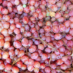 juicy red grapes isolated, natural background