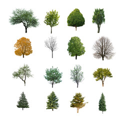 trees are isolated