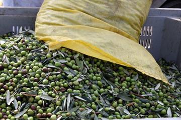 Fototapete - Sacco di olive verdi