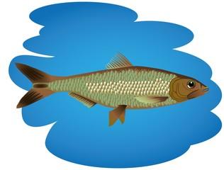 illustrated fish