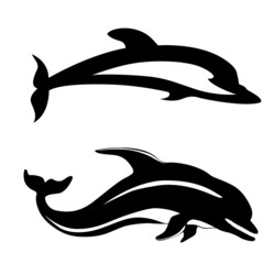 two dolphins on white background