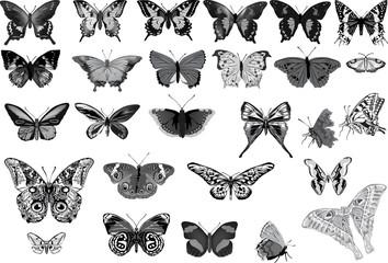 set of twenty seven grey butterflies