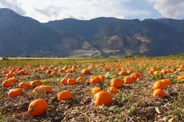 Keremeos Pumpkin Patch