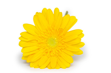 Yellow  gerbera flower. Isolated on white