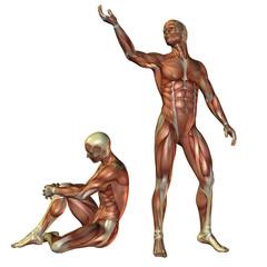 Wall Mural - Muskelaufbau Mann stehend und sitzend