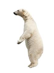 Wall Mural - Standing polar bear