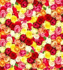 roses. colorful flowers wallpaper