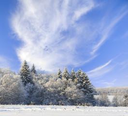 Fototapete - Winter landscape.
