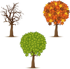 Autumn, Summer and winter  tree icon set on white