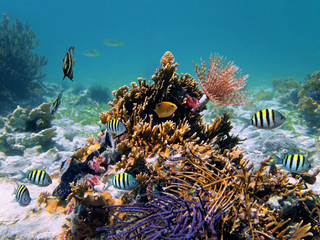 Sea life underwater with coral, marine worm and tropical fish in the Caribbean sea, Mexico