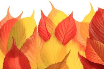 秋の色模様