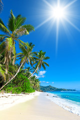 Dream Summertime Sunny Day