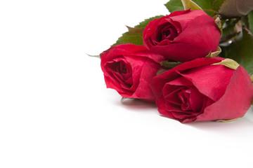 Image of roses  on white background.