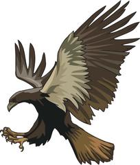 Falcon in attack
