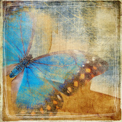 Fotorolgordijn Vlinders in Grunge grunge background with butterfly