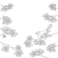 Titmouse on pine branch, contour. Vector