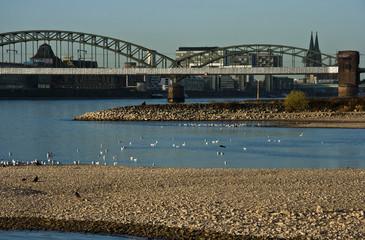 Rhein bei Köln, Niedrigwasser