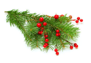 Christmas green branch with red berry isolated