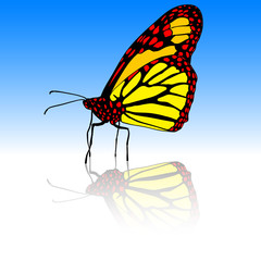 Beautiful tropical butterfly. Vector illustration.