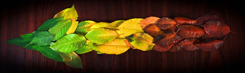 Photo of colorful leaves showing the direction on wooden backgro