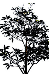 Photo of tree silhouette