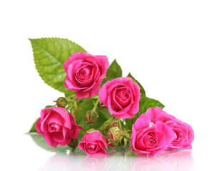 Many pink roses isolated on white