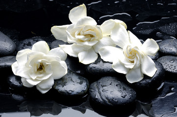 Zelfklevend Fotobehang Spa Wet Zen Spa Stones with gardenia flower
