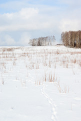 Wall Mural - Bright winter day. Approach of spring