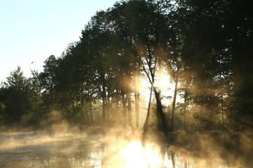 Keuken foto achterwand Bos in mist Deciduous forest surrounded by mist floating over the water