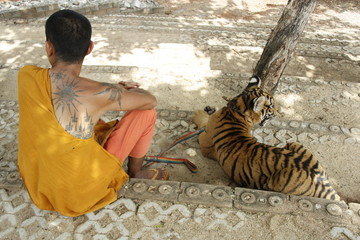 Monk and the Tiger