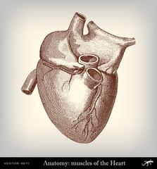 Engraving vintage heart.
