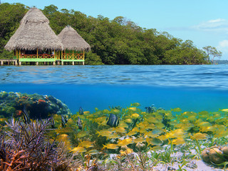 Above and below with thatched hut over water and coral reef with school of tropical fish underwater, Caribbean sea, Panama