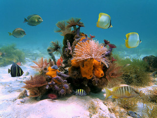 Underwater colorful marine life with marine worms, sponges and tropical fish in the Caribbean sea